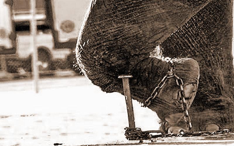 Grasso come un elefante.