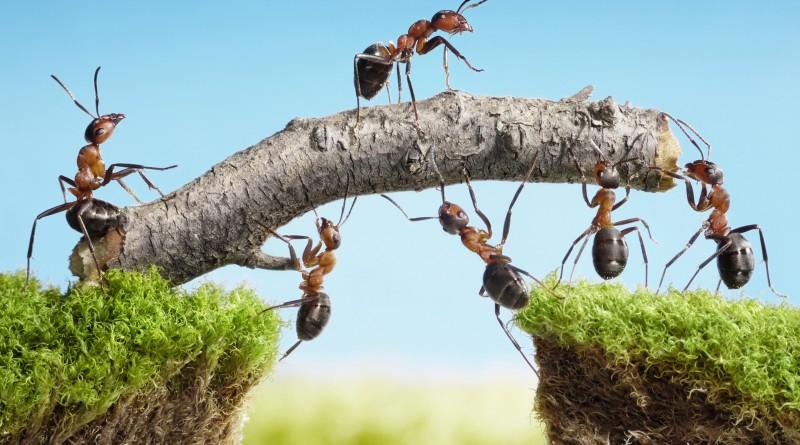 Un bodybuilder è una formica? Strategie per il successo.